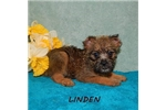 Picture of Linden