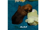 Picture of ALIKA