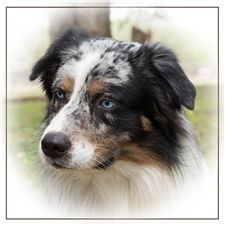 View full profile for Southern Sunshine Aussies
