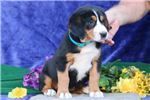 Picture of Ava  BL Beautiful Markings