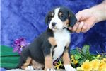 Picture of Tyler BL Beautiful Markings