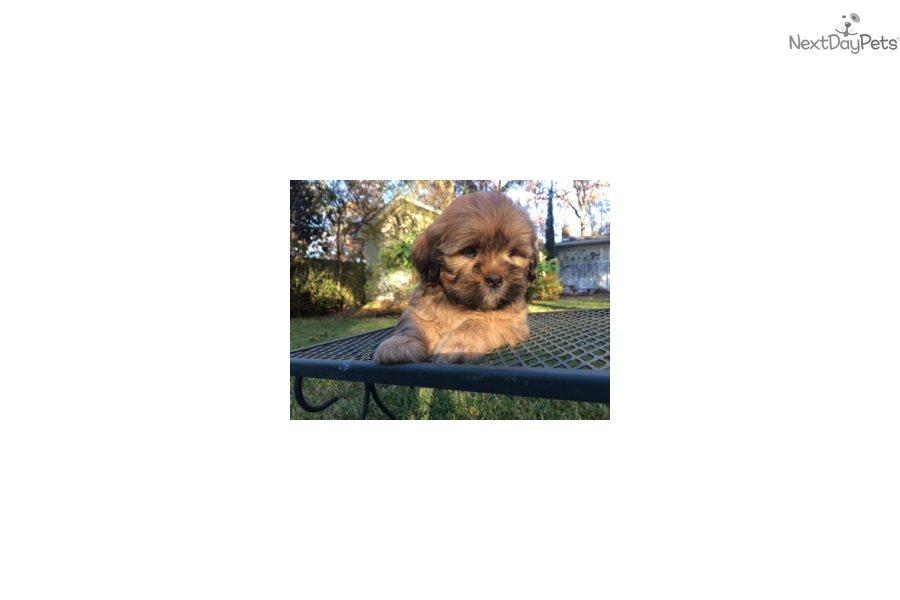 Puppies Albany Ga