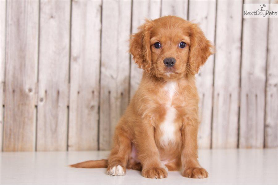 Puppies Ohio