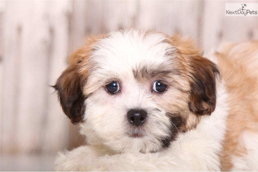 Dog Grooming Columbus Ohio