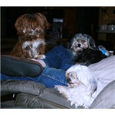 View full profile for Be About Havanese