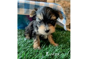 Picture of Ranger