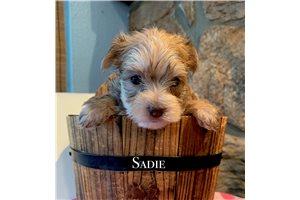 Picture of Sadie