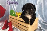 Picture of Sparky