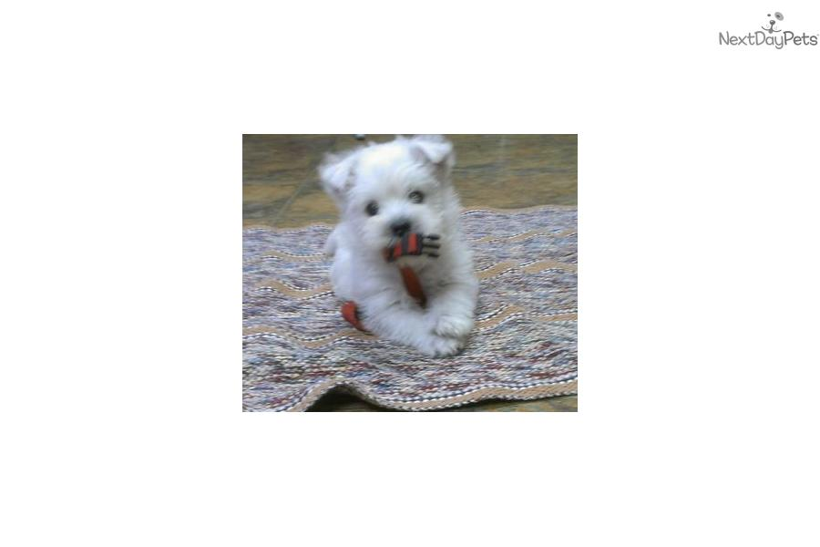 Puppies for Sale from 4-W Country Aire Kennel - Member since