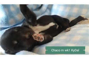 Picture of Chaco