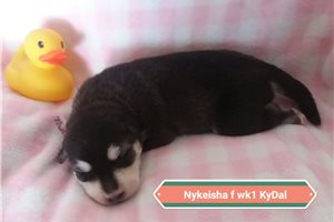 Picture of Nykeisha Pending