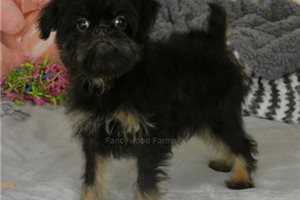 Picture of Frances AKC