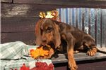 Picture of Akc Daisey