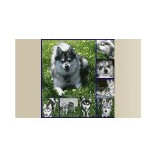 View full profile for Itzy Bitzy Huskies