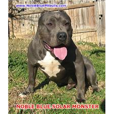 View full profile for Noblebluepitbulls