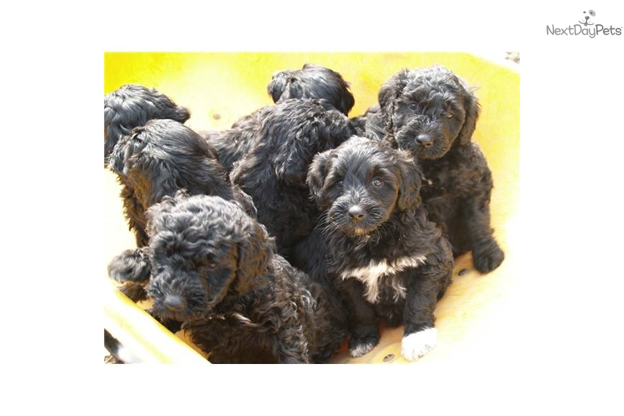 Puppies For Sale From Sea Dog Kennels Member Since November 2008