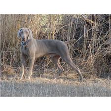 View full profile for Silver Creek Kennels