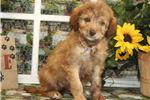 Picture of Winnie1