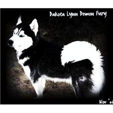 View full profile for Dakota Lynn Siberians