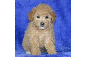 Picture of AKC Maddie