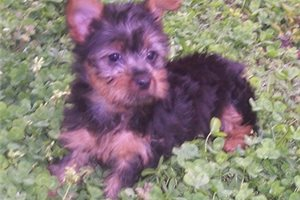 Picture of AKC Erin