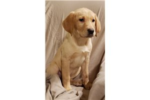 Picture of AKC Cami
