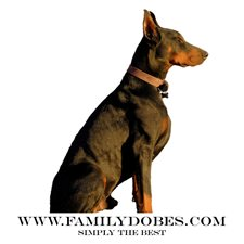 View full profile for Familydobes