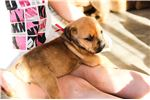 Picture of Pink Sheba