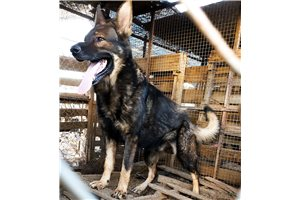 Picture of GSD Blk F