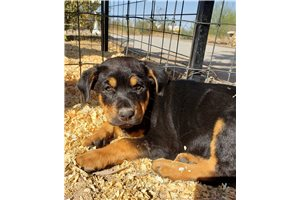 Picture of Rott F