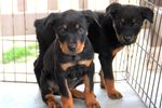 Picture of Rott F3