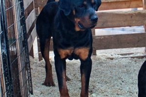 Picture of Rott M