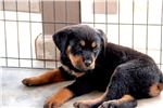 Picture of Rott F1